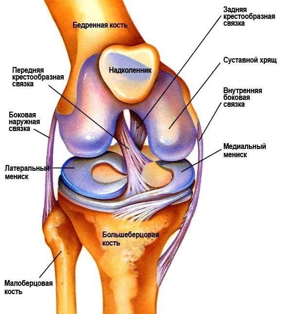 ortoped1a